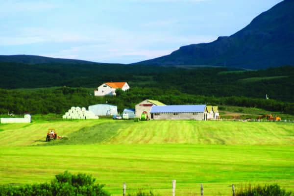 Leifsstaðir