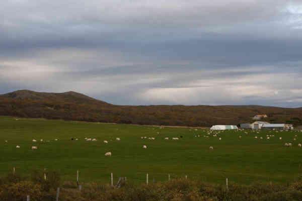 Leifstaðir (2)