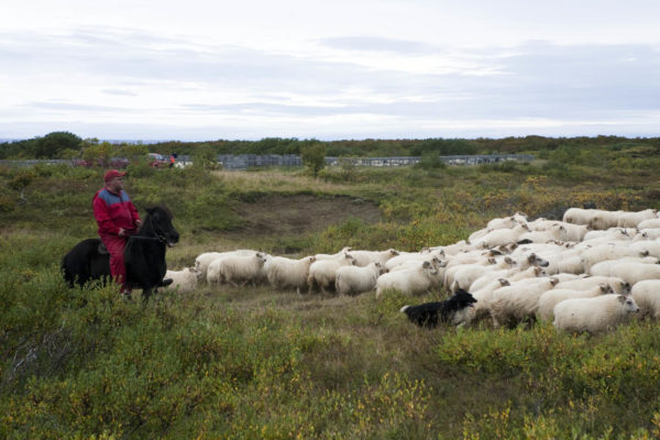 Leifstaðir (6)